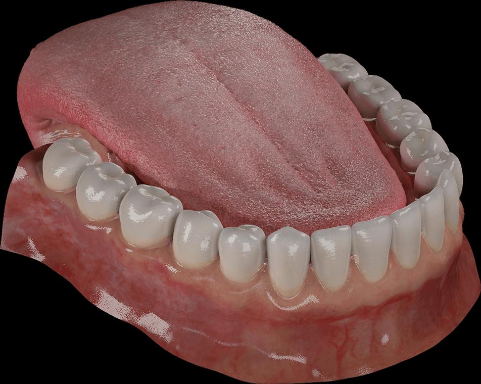 Free 3D Teeth Model   3D Gladiator